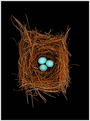 Blue Eggs Nest by Roy DiTosti