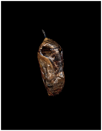 Moth Pod by Roy DiTosti